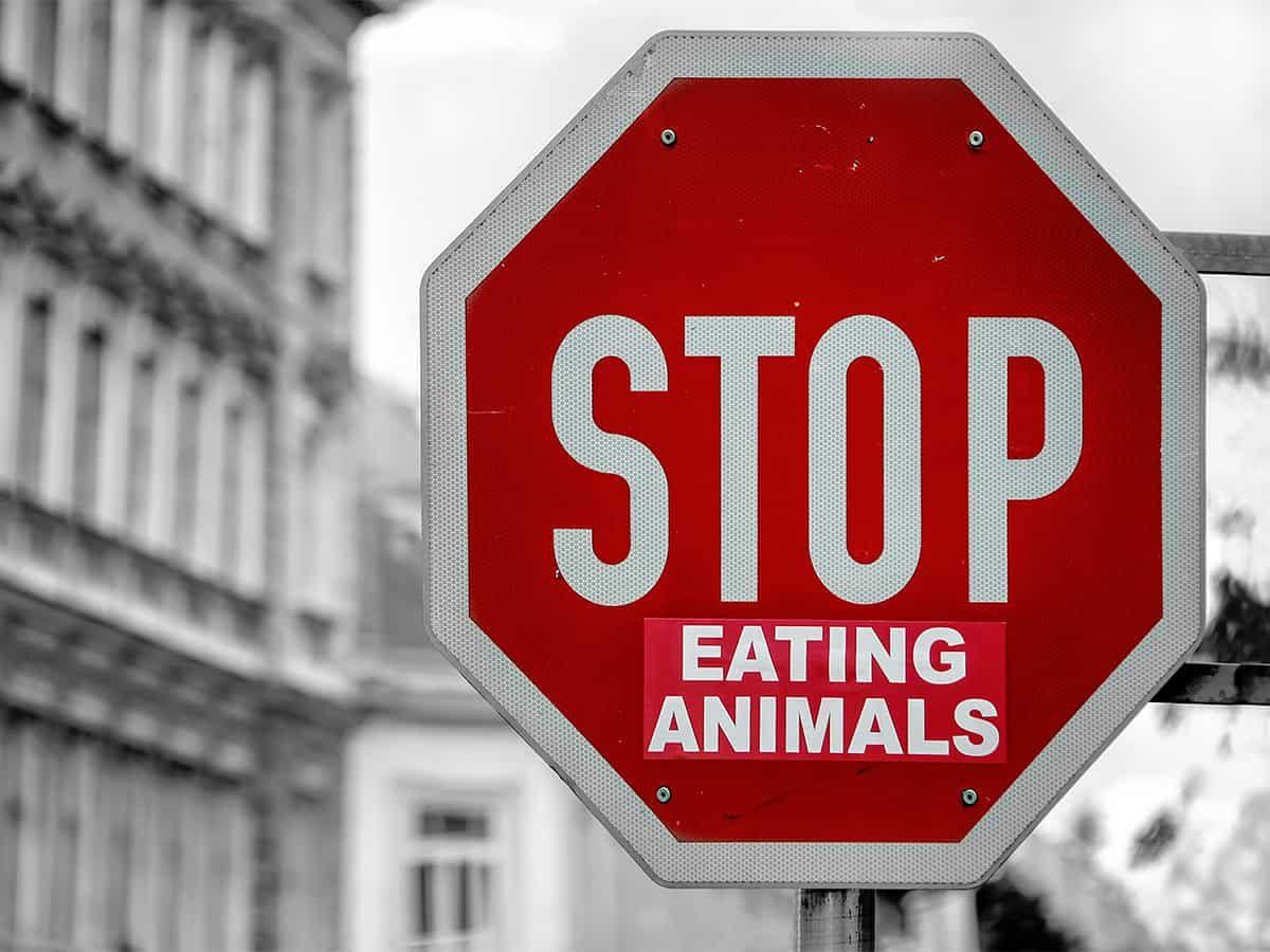 Vegan Ethics